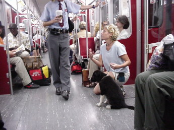 Young woman on the subway with her ten- week-old Border Collie puppy. Young woman is crouched down beside her puppy while she chats with a uniformed subway employee. Several people are also on the subway