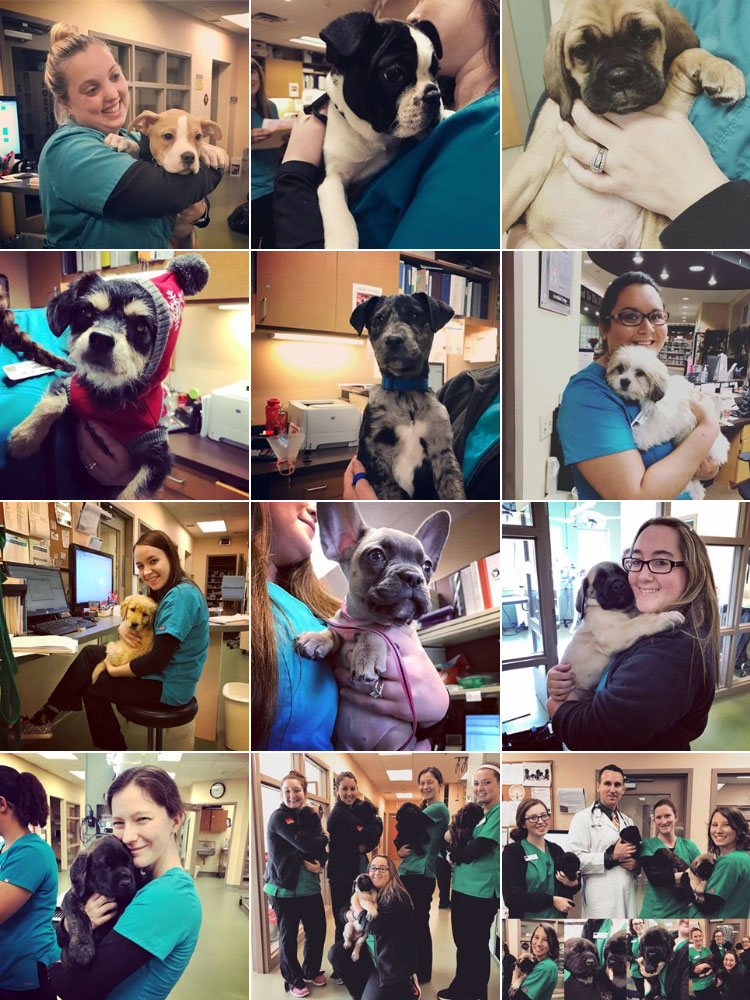 multiple pictures of a variety of veterinary technicians holding puppies at the Neffsville Veterinary Clinic. Everyone is smiling and all the puppies looked relaxed and comfortable.