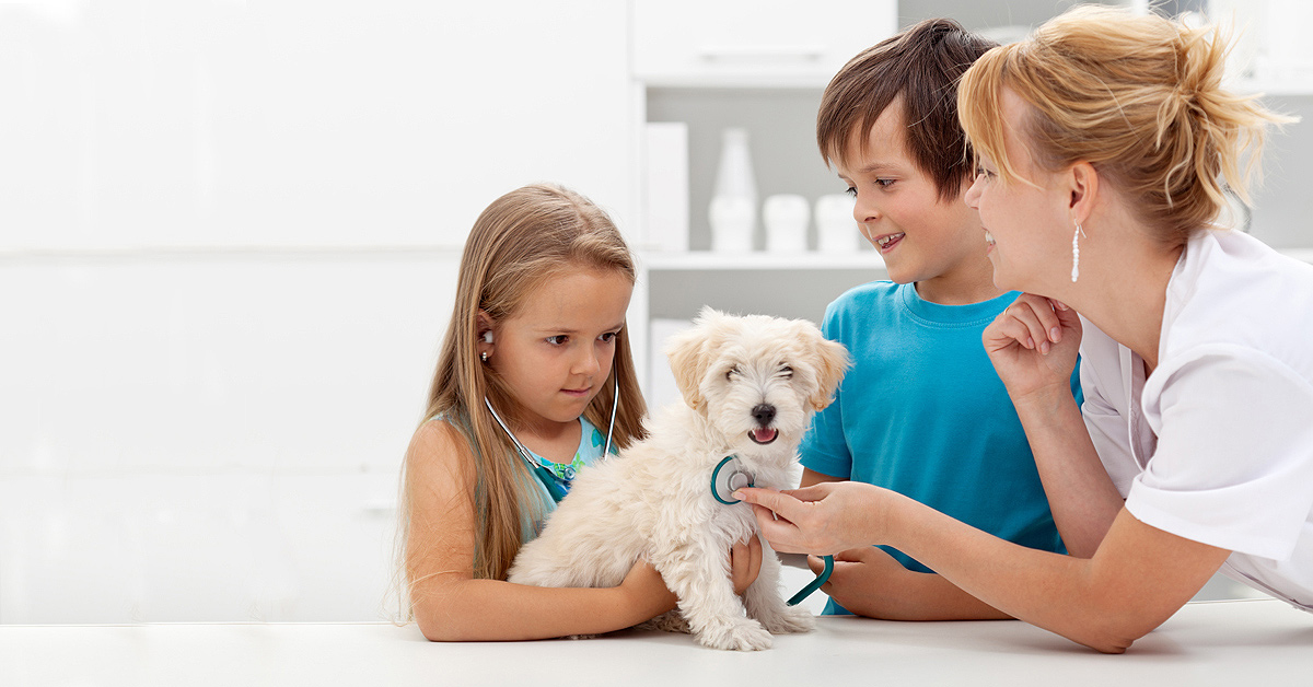 In this image a very young girl is being coached by her vet to listen to the heartbeat of her labradoodle puppy while her brother watches while standing beside her.